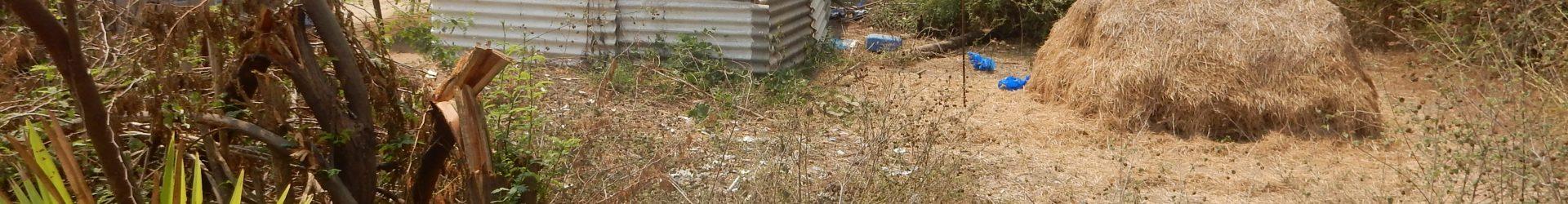 Progetto costruzioni: un pozzo per Punapakkam (India)